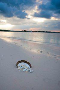 AUTORE-FARMING-(pearls-on-beach)